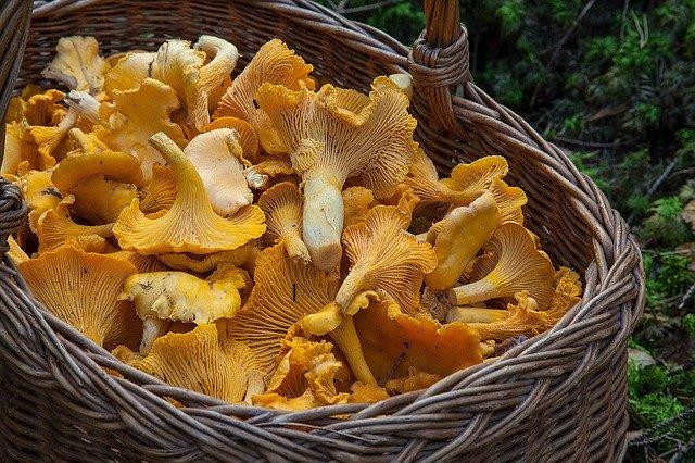 fungus-1194380_640.jpg