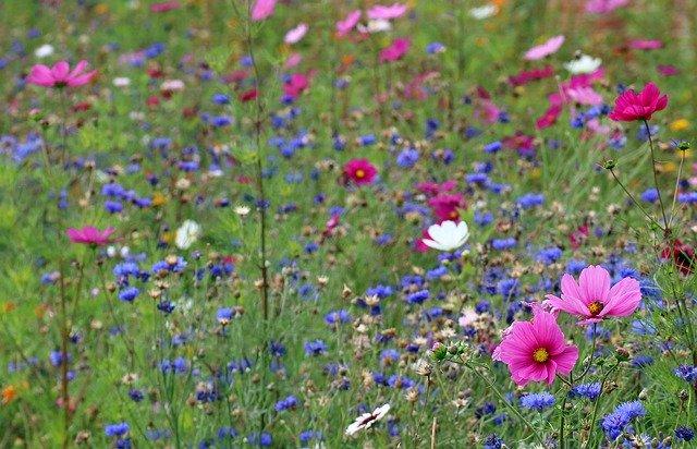 wildflower-meadow-4442606_640.jpg