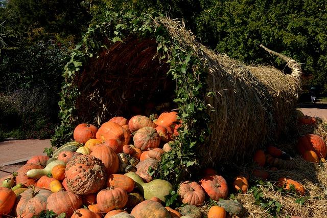 pumpkins-1004417_640